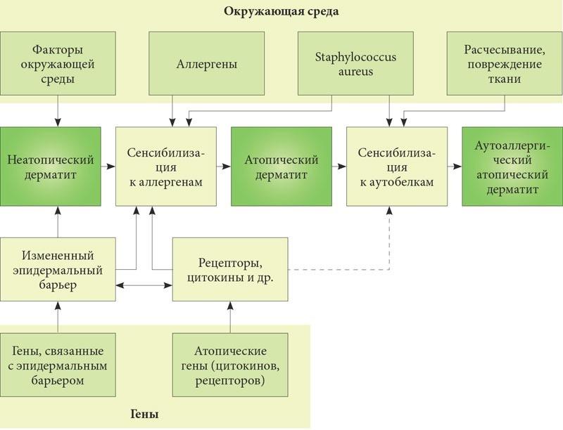 Хорошее средство от атопического дерматита